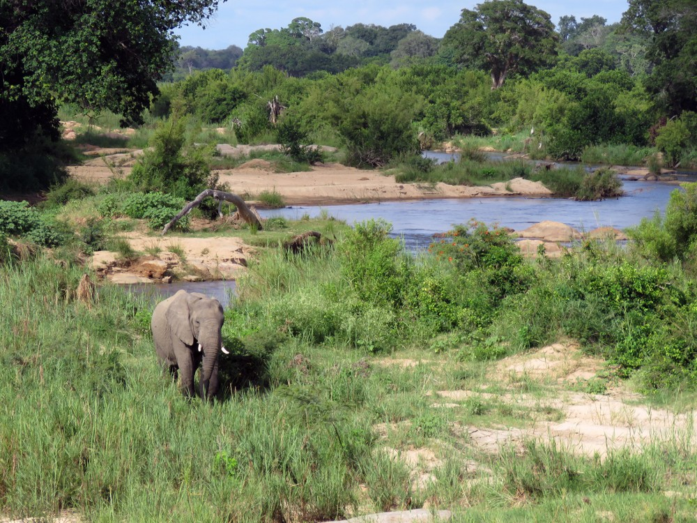 13 Elephant in River bed
