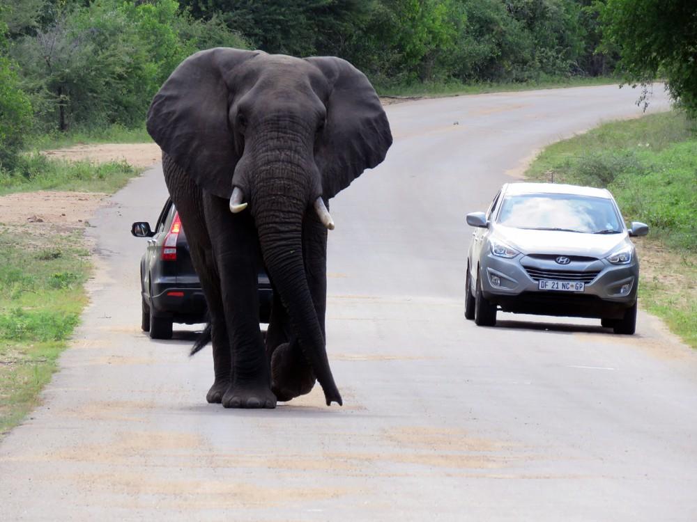 18 Giant Elephant