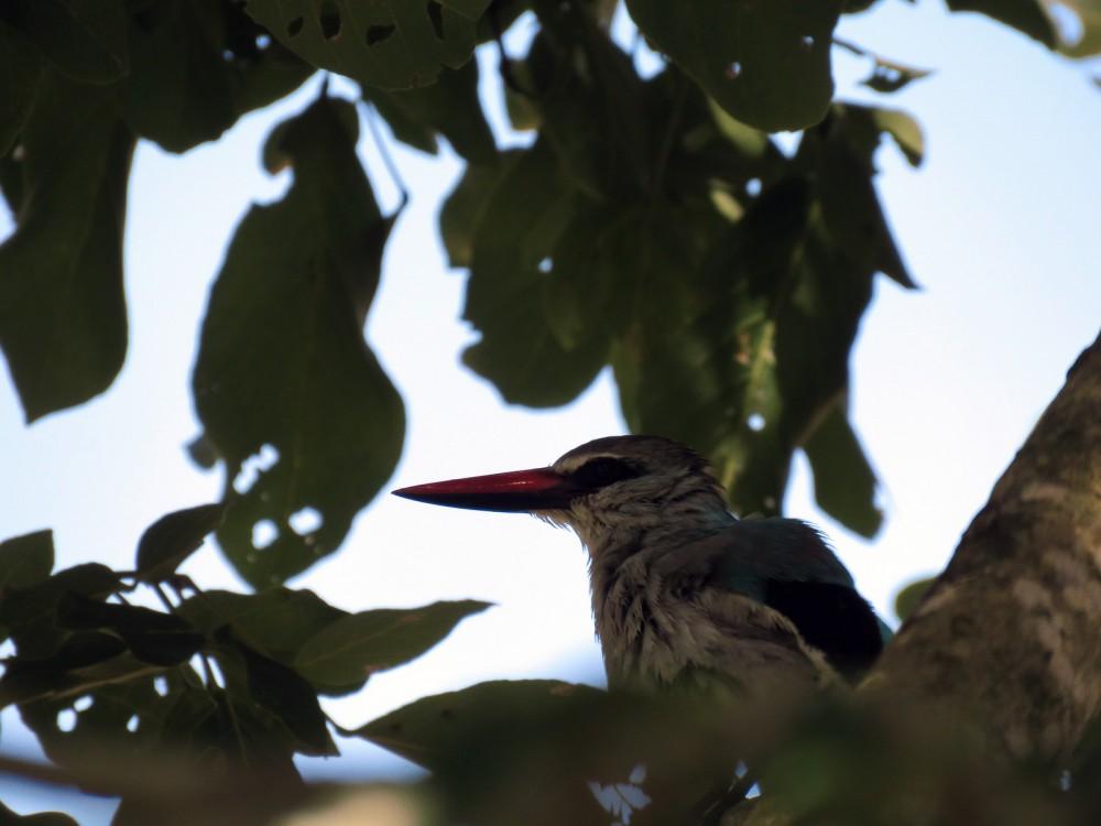 19 Kingfisher