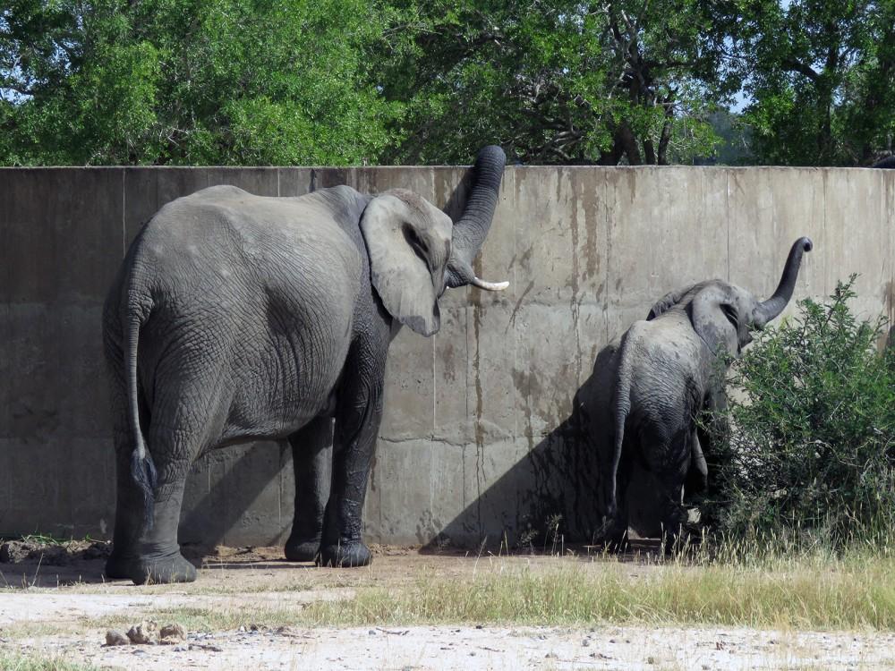 32 Res Elephant