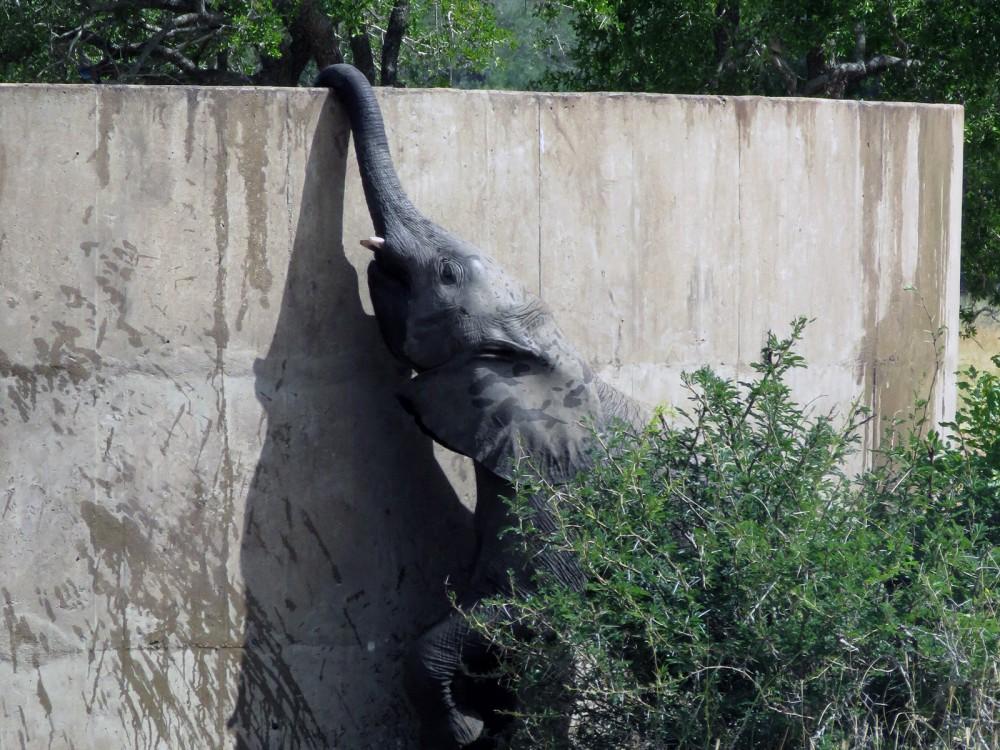 34 Res Elephant.JPG