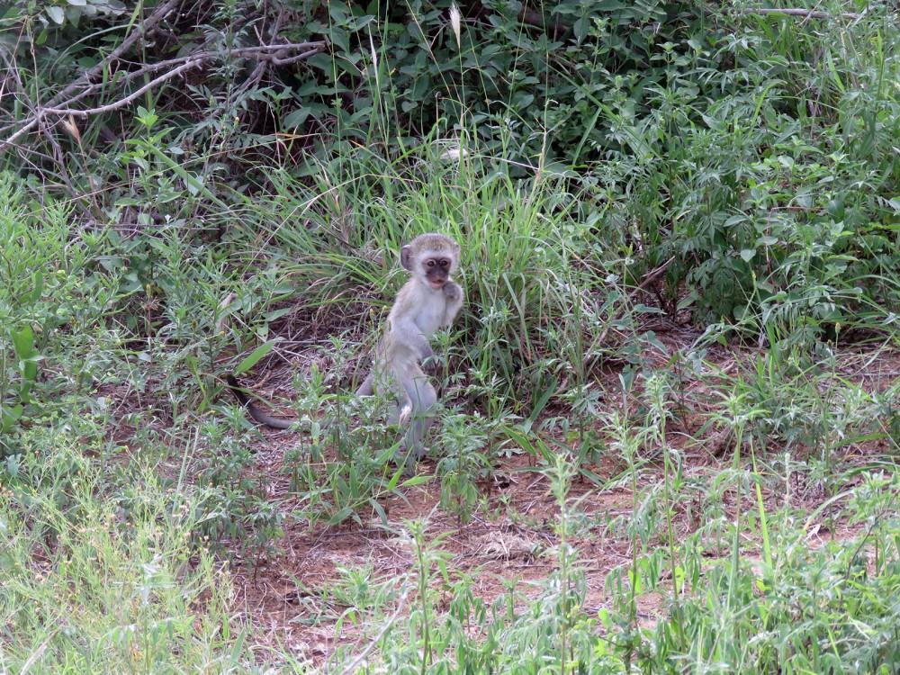 45 Monkey