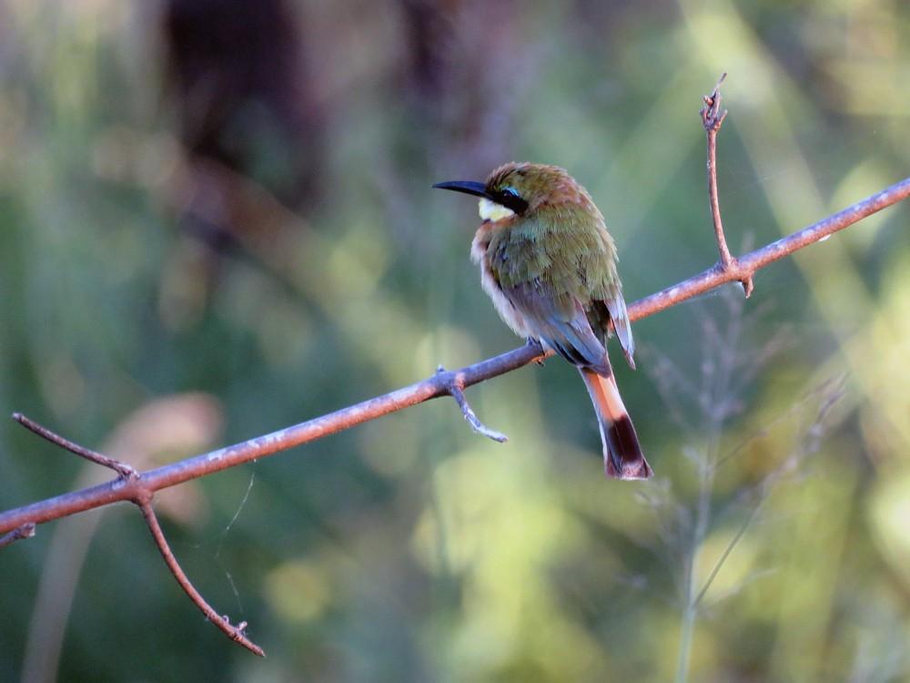 8 Birdy